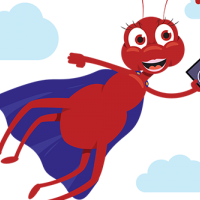Abbey cape illustration red ant